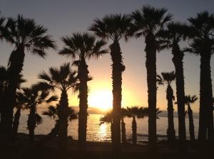 Palm trees, sunset, tenerife