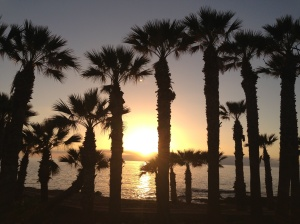 Palm trees, sunset, tenerife