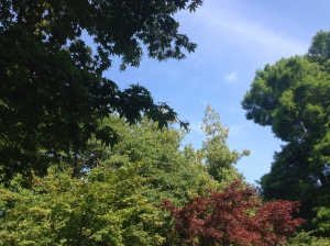 Our view upwards in Roath Park