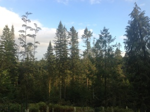 the view from our back garden, Center Parcs