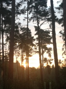 sunrise at Center Parcs