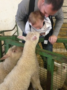 Meeting the lambs at Fantasy farm