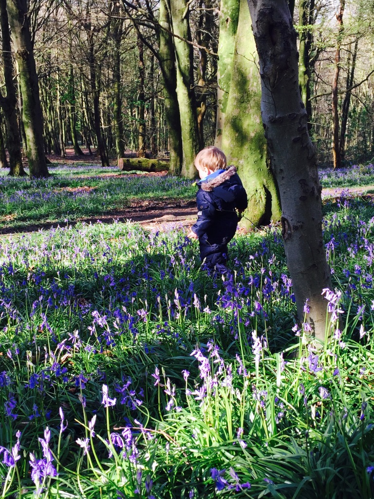 toddler W exploring bluebell woods