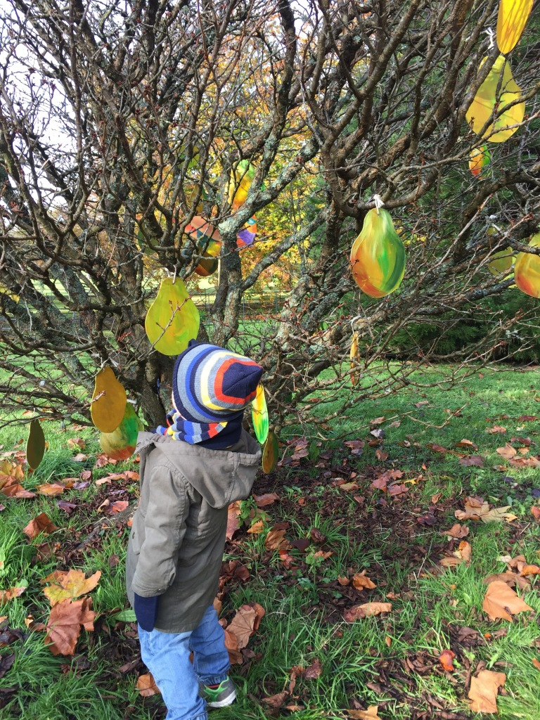 Looking for a partridge in a pear tree at Dyffryn Gardens