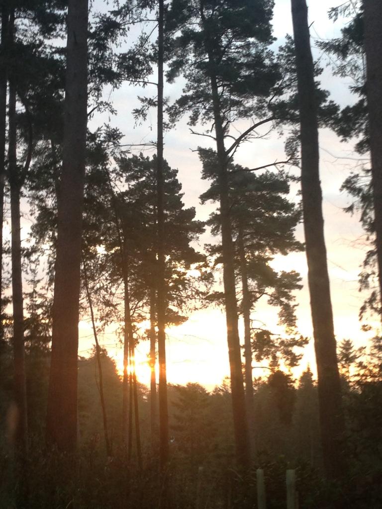 Sunrise at center parcs