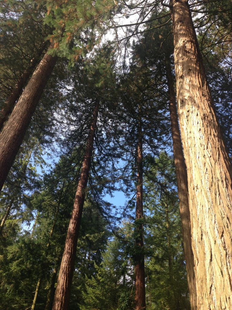 Trees at center parcs!