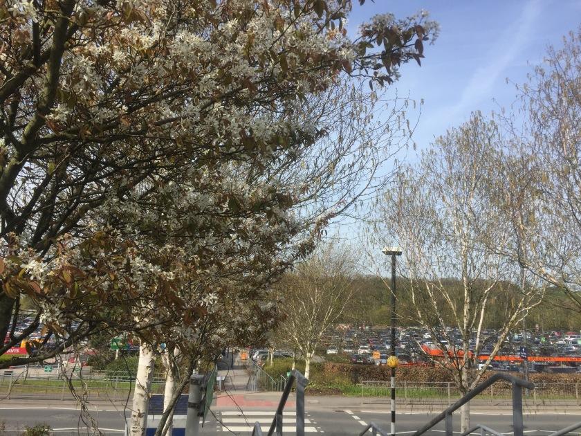 Bristol airport car park