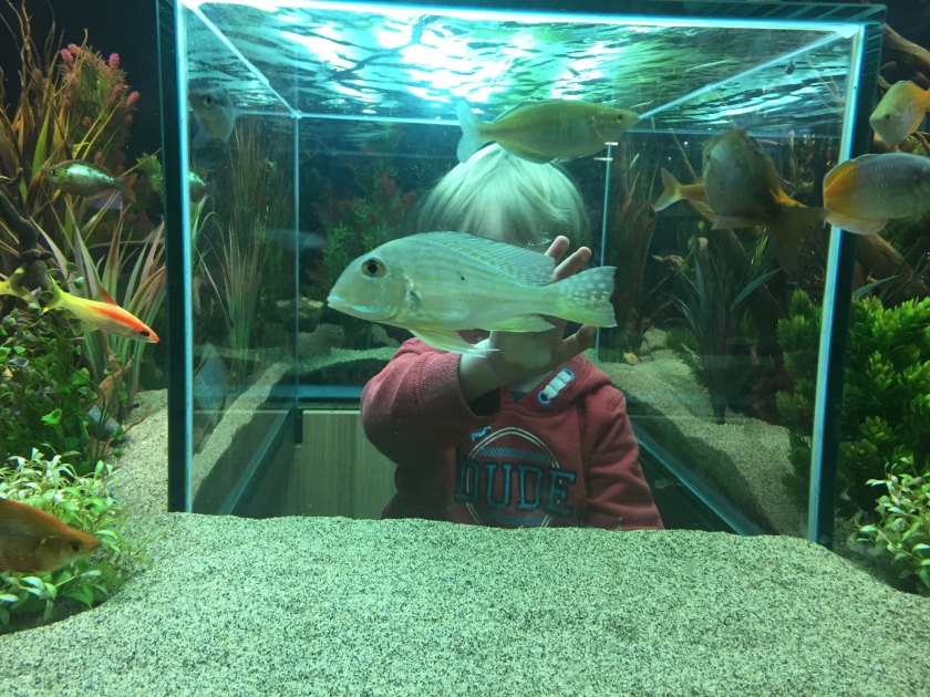 Pughs Garden centre fish