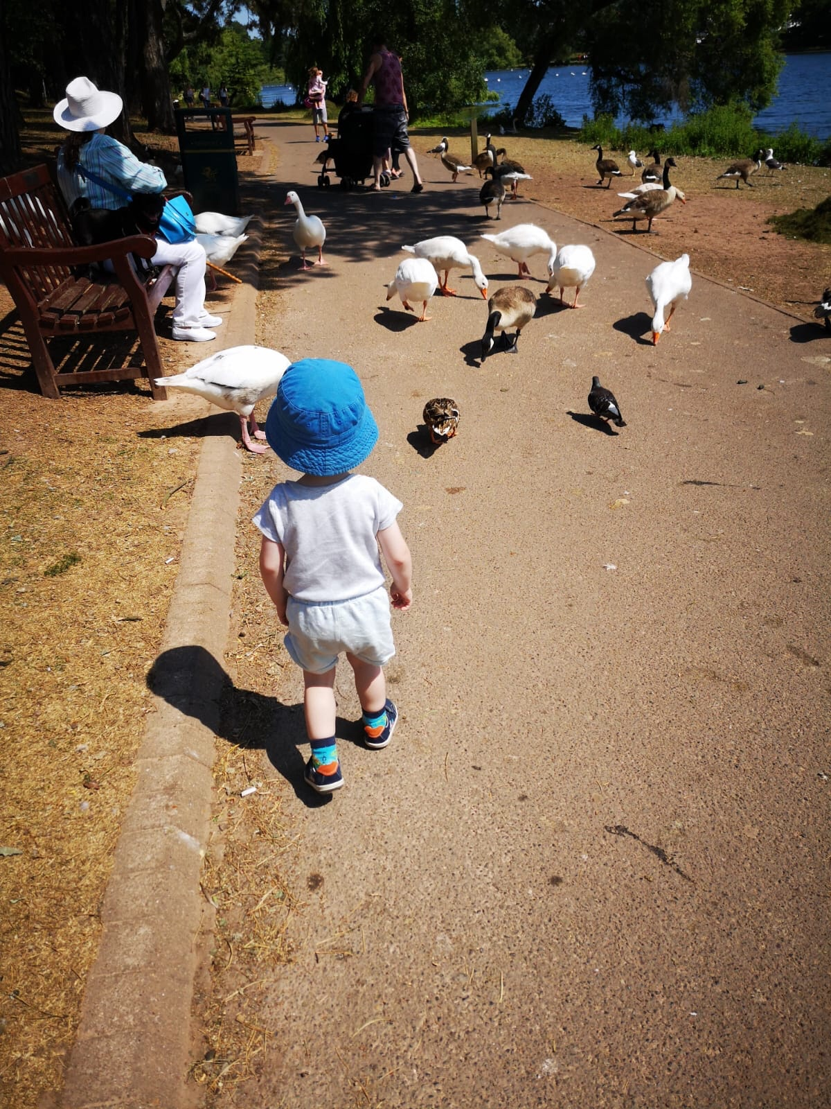 Toddler with ducks roath Park